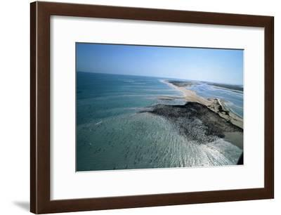 Aerial view of a massive colony of cormorants on a low-lying island off the coast of Umm al-Qaiwain-Werner Forman-Framed Giclee Print