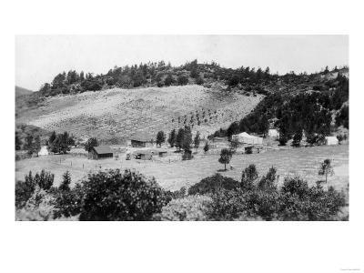 Aerial View of a Sonoman Vineyard - Sonoma, CA-Lantern Press-Art Print