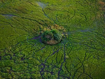 Aerial View of Animal Trails Leading to a Small Island in the Delta-Beverly Joubert-Photographic Print