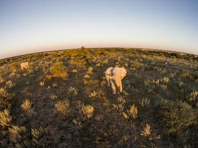 Aerial View of Elephant, Nxai Pan National Park, Botswana-Paul Souders-Photographic Print