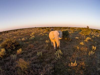 Aerial View of Elephant, Nxai Pan National Park, Botswana-Paul Souders-Photographic Print