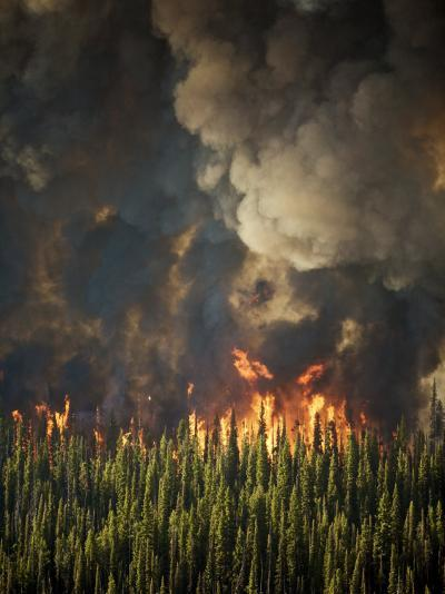 Aerial View of Forest Fires in the Boise National Forest-Mark Thiessen-Photographic Print