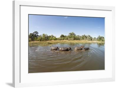 Aerial View of Hippo Pond, Moremi Game Reserve, Botswana-Paul Souders-Framed Photographic Print