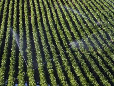 Aerial View of Irrigated Potato Furrows, Eastern Idaho, USA-Marli Miller-Photographic Print