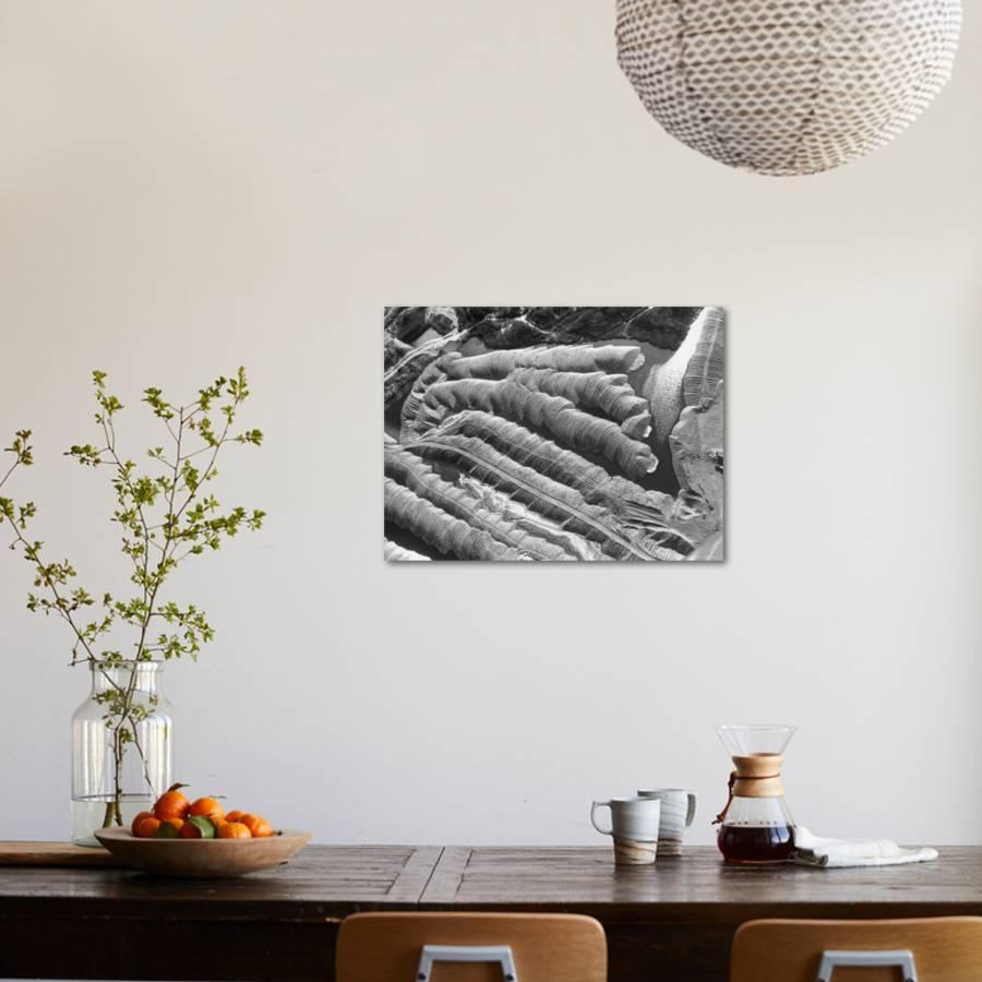 Aerial View of Tailings of Gravel, Left by Gold Dredge, Looking Like Stacks  of Coins Photographic Print by Thomas D  Mcavoy | Art com