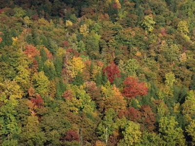 Aerial View over Autumnal Forest Canopy, Near Green Knob, Blue Ridge Parkway, North Carolina, USA-James Green-Photographic Print