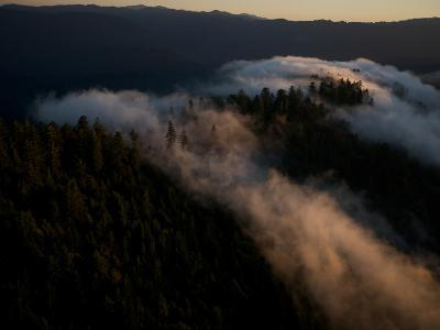 Aerials over Headwaters Forest Reserve-Michael Nichols-Photographic Print
