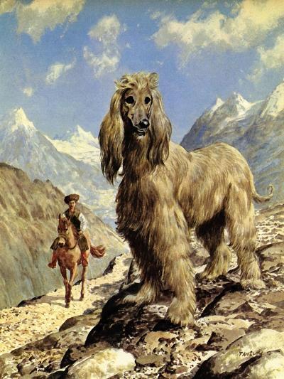 Afghan Hound-Eric Tansley-Giclee Print