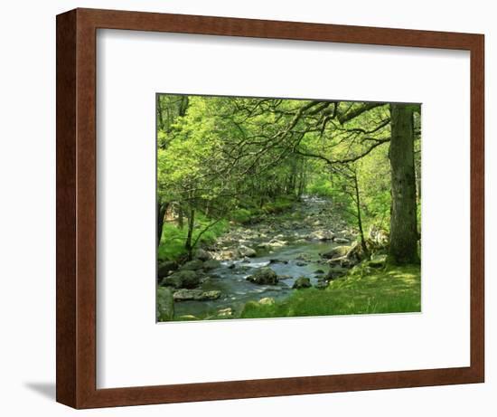Afon Artro Passing Through Natural Oak Wood, Llanbedr, Gwynedd, Wales, United Kingdom, Europe-Pearl Bucknall-Framed Photographic Print