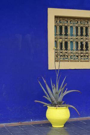 https://imgc.artprintimages.com/img/print/africa-morocco-marrakesh-cactus-in-a-bright-yellow-pot-against-a-vivid-majorelle-blue-wall_u-l-q13bi6r0.jpg?p=0