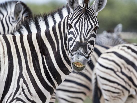 Africa, Namibia, Etosha National Park. Zebra Looking at Camera-Jaynes Gallery-Photographic Print