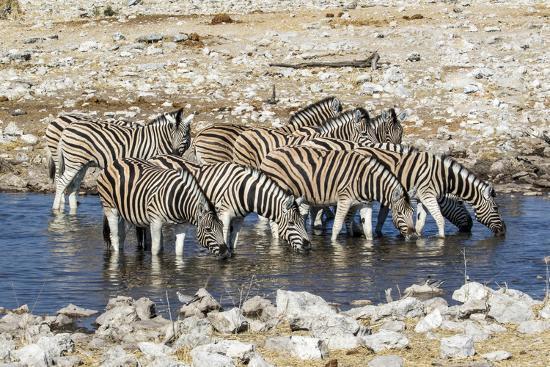 Africa, Namibia, Etosha National Park, Zebras at the Watering Hole-Hollice Looney-Photographic Print