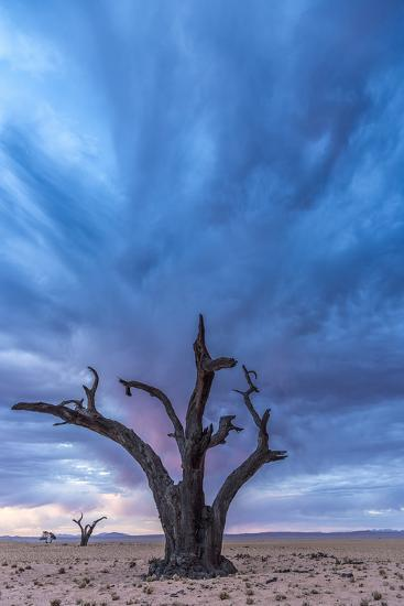 Africa, Namibia, Hardap region. A romantic sunset.-Catherina Unger-Photographic Print