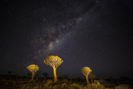 Africa, Namibia, Keetmanshoop. Milky Way over the Quiver tree Forest-Hollice Looney-Photographic Print