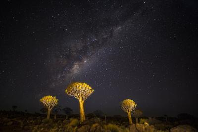 https://imgc.artprintimages.com/img/print/africa-namibia-keetmanshoop-milky-way-over-the-quiver-tree-forest_u-l-q1dezj70.jpg?p=0