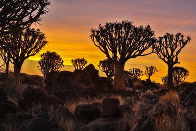 https://imgc.artprintimages.com/img/print/africa-namibia-keetmanshoop-sunset-at-the-quiver-tree-forest-at-the-quiver-tree-forest-rest-camp_u-l-q1desrb0.jpg?p=0