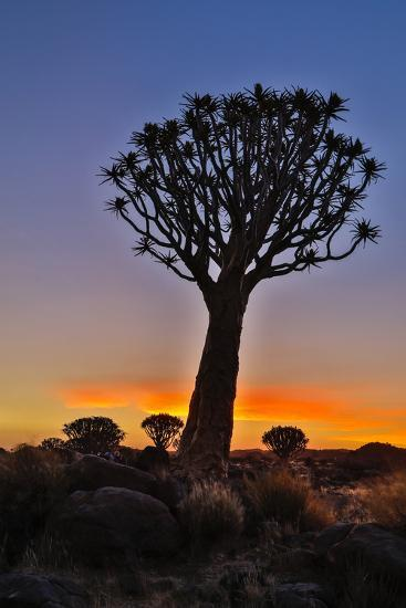 Africa, Namibia, Keetmanshoop, sunset at the Quiver tree Forest at the Quiver tree Forest Rest Camp-Hollice Looney-Photographic Print