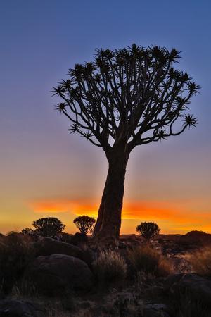 https://imgc.artprintimages.com/img/print/africa-namibia-keetmanshoop-sunset-at-the-quiver-tree-forest-at-the-quiver-tree-forest-rest-camp_u-l-q1desvy0.jpg?p=0