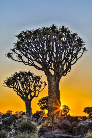 Africa, Namibia, sunrise at the Quiver tree Forest at the Quiver tree Forest Rest Camp-Hollice Looney-Framed Photographic Print