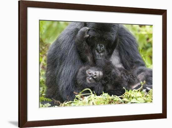 Africa, Rwanda, Volcanoes National Park. Female mountain gorilla with her young.-Ellen Goff-Framed Premium Photographic Print
