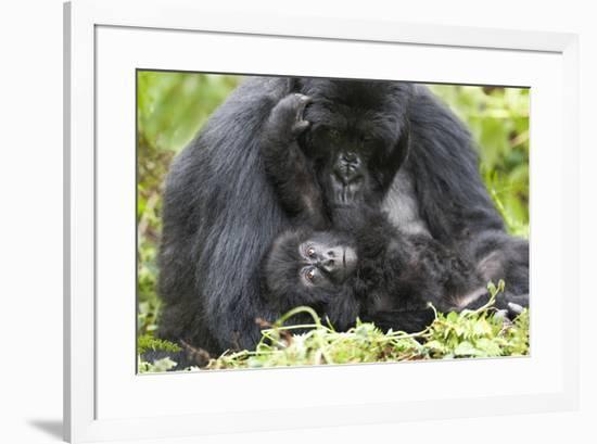 Africa, Rwanda, Volcanoes National Park. Female mountain gorilla with her young.-Ellen Goff-Framed Premium Photographic Print