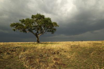 Africa Savannah--Photographic Print