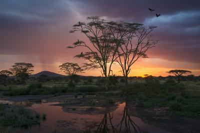 Africa. Tanzania. Sunset lights up a flock of Marabou storks in a marsh, Serengeti National Park.-Ralph H^ Bendjebar-Photographic Print