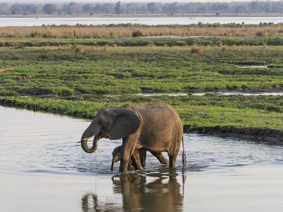 Africa, Zambia. Mother and Young in River-Jaynes Gallery-Photographic Print