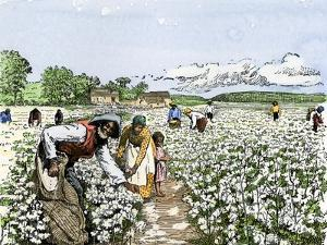 African-American Field-Hands Picking Cotton
