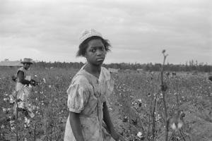 African American Girl Picking Cotton in Arkansas, Oct. 1935