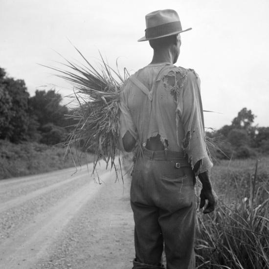 African-American on cotton patch in Mississippi, 1936-Dorothea Lange-Photographic Print