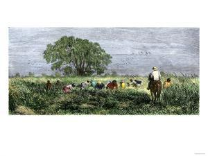 African-Americans Cutting Rice in Louisiana, Supervised by an Overseer on Horseback