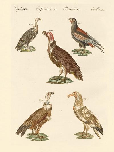 African and Asiatic Vultures--Giclee Print