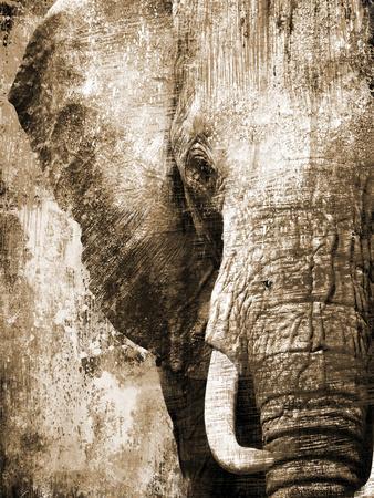 African Animals I - Sepia-Eric Yang-Premium Giclee Print
