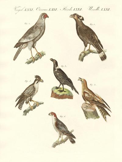 African Birds--Giclee Print