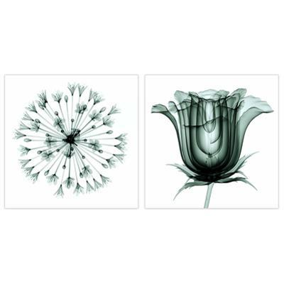African Bluebell and Rose Veil - 2 Piece Free Floating Tempered Glass Panel Graphic Wall Art