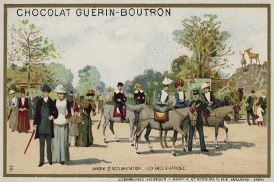 African Donkeys, Jardin D'Acclimation, Paris--Giclee Print