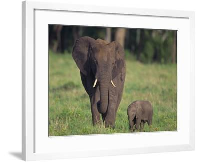 African Elephant Calf with Mother in Grass-DLILLC-Framed Photographic Print