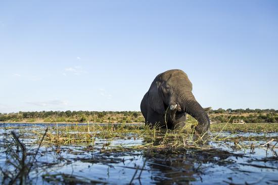 African Elephant, Chobe National Park, Botswana-Paul Souders-Photographic Print