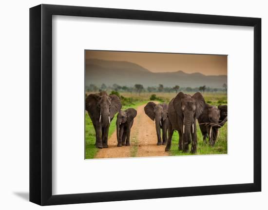 African Elephant Family on Safari, Mizumi Safari Park, Tanzania, East Africa, Africa-Laura Grier-Framed Photographic Print