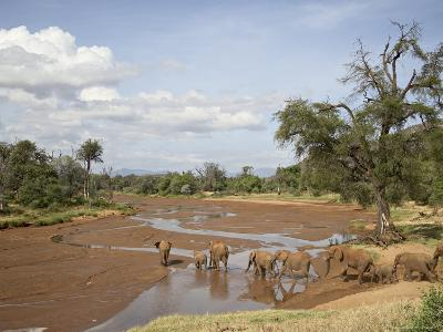 African Elephant Going to the Uaso Nyro River, Samburu National Reserve, Kenya, East Africa, Africa-James Hager-Photographic Print