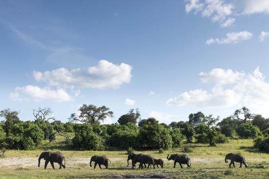 African Elephant Herd, Chobe National Park, Botswana-Paul Souders-Photographic Print