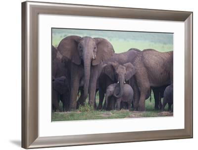 African Elephant Herd with Young-DLILLC-Framed Photographic Print
