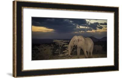 African Elephant (Loxodonta Africana) Bull 'One Ton' with Massive Tusks at Dusk-Wim van den Heever-Framed Photographic Print