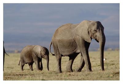 African Elephant mother and calf, Kenya-Tim Fitzharris-Art Print
