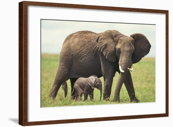 African Elephant Mother and Young in Grass-DLILLC-Framed Photographic Print