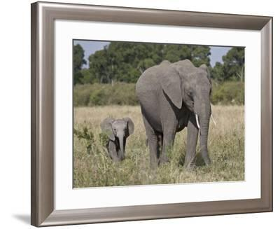 African Elephant Mother and Young, Masai Mara National Reserve-James Hager-Framed Photographic Print
