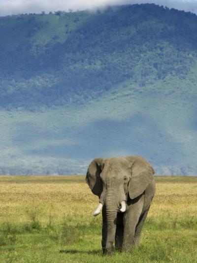 African Elephant, Ngorongoro Crater, Arusha, Tanzania-Ariadne Van Zandbergen-Photographic Print