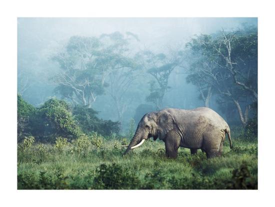 African elephant, Ngorongoro Crater, Tanzania-Frank Krahmer-Art Print