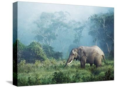 African elephant, Ngorongoro Crater, Tanzania-Frank Krahmer-Stretched Canvas Print